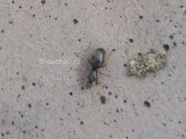 3+6 способов, как избавиться от муравьев в огороде. Действуйте!