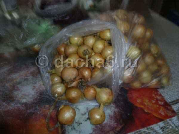 Как правильно выбрать лук севок для посадки весной