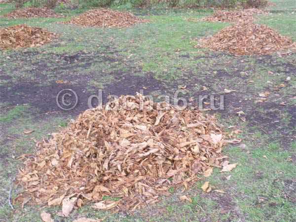 Как сделать листовой перегной в мешках