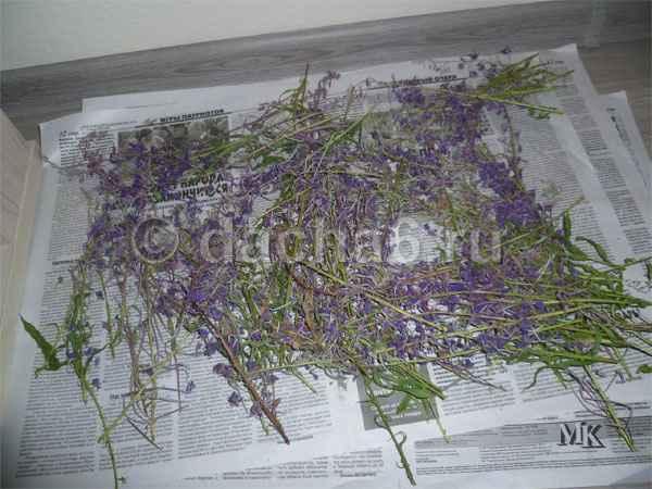 Как сушить травы в домашних условиях