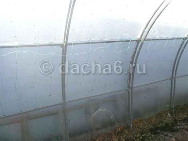 Как установить шпалерную сетку в теплице для огурцов