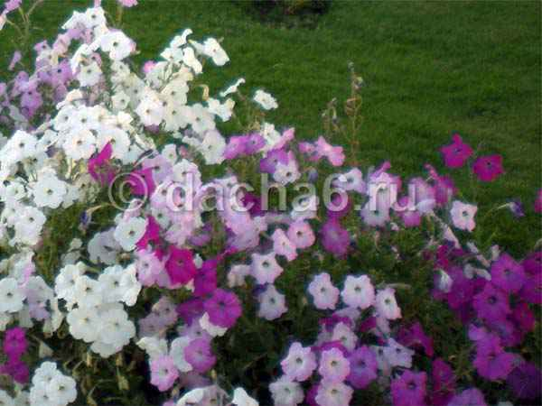 Какие цветы сажают в декабре на рассаду
