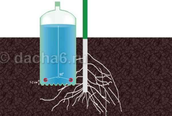 Капельный полив в теплице из пластиковых бутылок своими руками