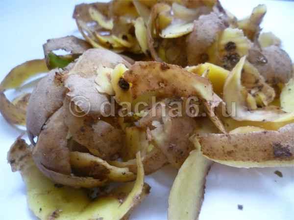 Картофельные очистки как удобрение: для каких растений подходят?