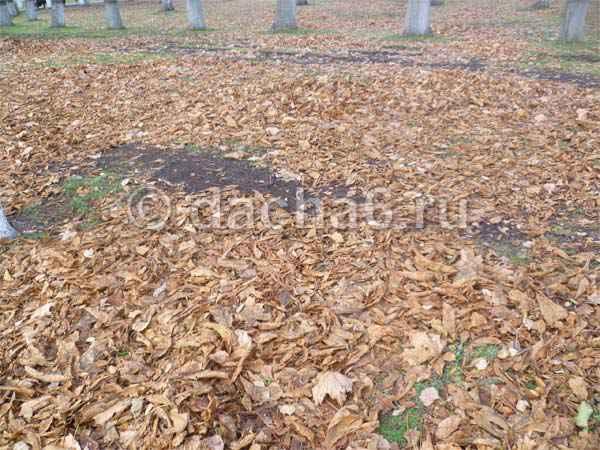 Компост из опавших листьев деревьев
