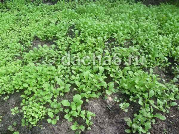 Перекапывать ли огород осенью