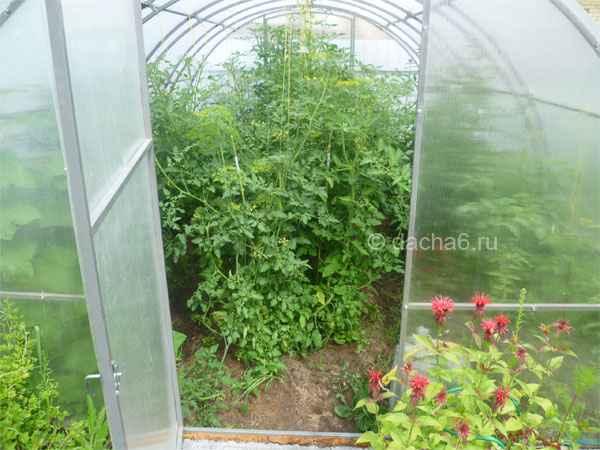 Защита растений в теплице от перегрева