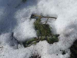 Как укрыть клубнику на зиму укрывным материалом