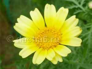 Какие цветы можно посадить осенью на даче и в саду у дома?