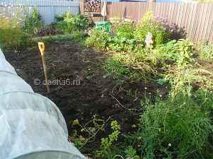 Когда выкапывают картошку в средней полосе России