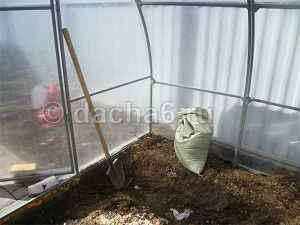Когда высаживать помидоры в теплицу из поликарбоната в Подмосковье