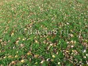 Надо ли убирать листья в саду осенью?