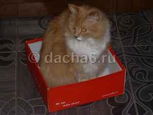 Почему коты любят сидеть в картонных коробках?
